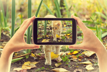 electronic tablet take pictures red cat
