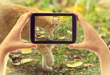 smartphone take pictures cat