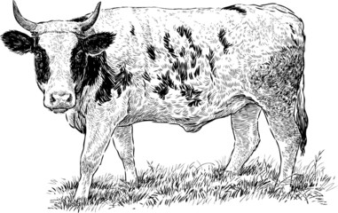 grazed cow