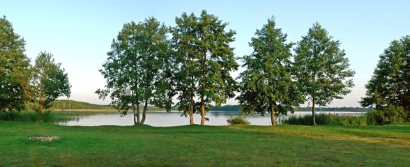 Green trees and the lake  at summer time