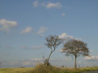 Bäume im Frankenwald