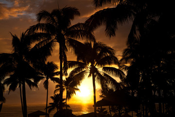 Palm trees at the ocean in Hawaii