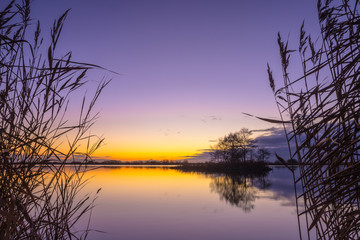 Wall Mural - Silhouette of Reed with serene Lake during Sunset