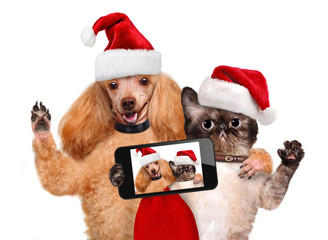 Cat and dog  taking a selfie together with a smartphone