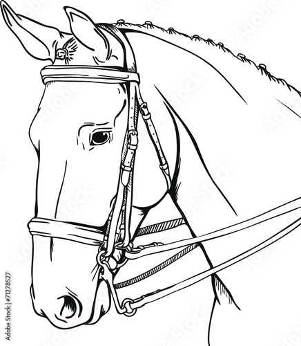 Dressage Horse Stock Image And Royalty Free Vector Files On Fotolia