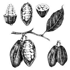 hand drawn cocoa beans set
