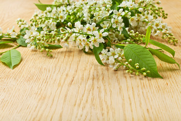 bird cherry tree branch with flowers and leaves on a wooden surf