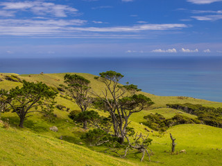 Wall Mural - New Zealand landscape green hills with sea