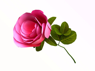 A Beautiful Rose in 3D