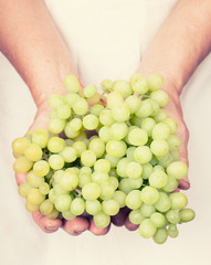 Elderly hands holding organic fresh green grapes with retro styl