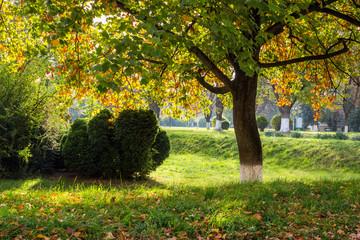 autumn tree foliage in city park