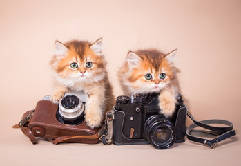 British shorthair cat with camera
