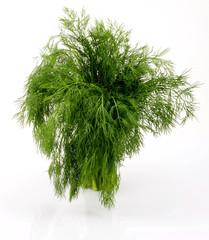 Tuinposter Palm boom koper