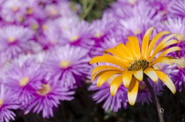fiori65