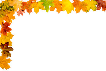 A frame made with autumn maple leaves isolated on white background