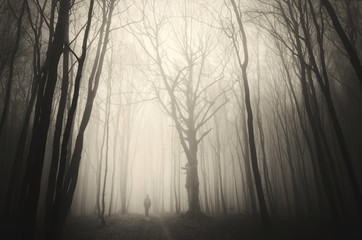 man walking past a huge old tree in a dark spooky forest Wall mural