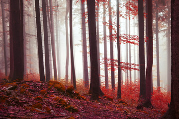 Wall Mural - Magic red colored forest