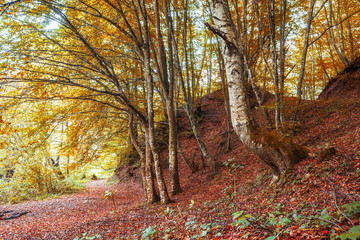 Beautiful autumn in forest