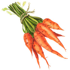 Healthy bunch of organic carrots isolated
