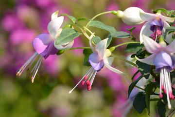 Blumen 331