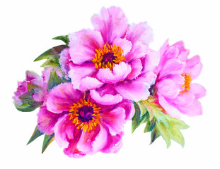Peonies isolated on white, oil painting