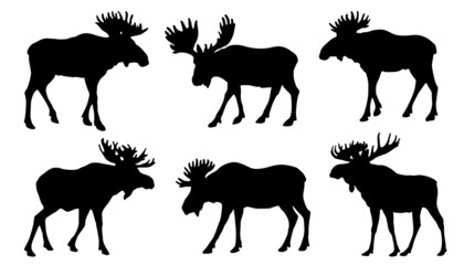 moose silhouttes