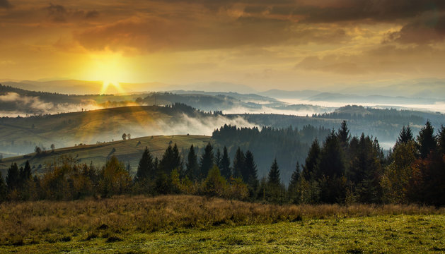 Coniferous forest in the high mountains at sunset
