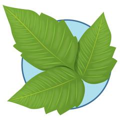 Nature Plant Poison Ivy