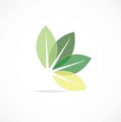 leaf icon vector