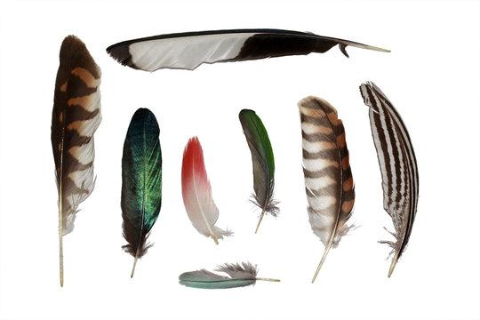 Feathers set collection isolated on white