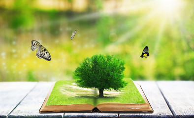 Fantasy tale book on nature background