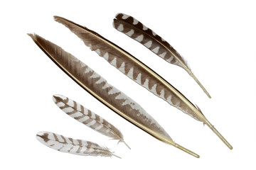 Curlew feathers collection isolated on white
