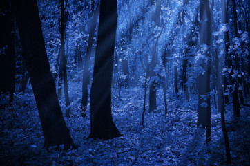 Wall Mural - Forest on moonlit night