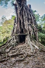 Fototapete - Sambor Prei Kuk temple ruins, Cambodia