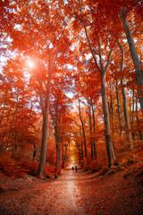 Poster Cuban Red Pathway through the autumn park unde sunlight