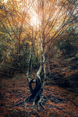 Curved tree in the autumn forest