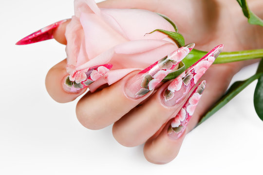Female hand with beautiful nails holds a rose.