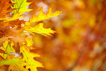 Abstract foliage background, beautiful tree branch in autumnal f
