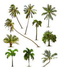 Different tropical palm trees. Vector