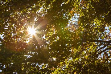 Herbst Sonnenschein