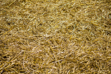 Fresh clean bed of straw.