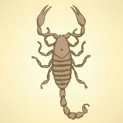 Sketch horrible scorpion in vintage style