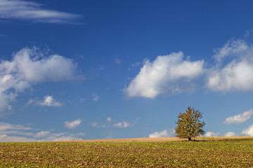 Hebst Landschaft