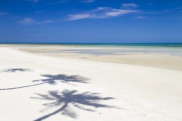 Beach with coconut