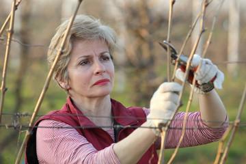 Agriculture, female farmer pruning grape branch in vineyard