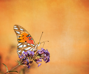 Gulf Fritillary butterfly on textured background