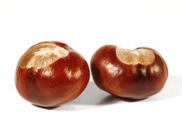 Horse-chestnut on a white background