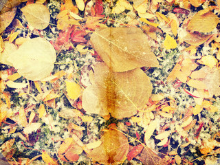 Grunge autumn background with dead leaves, vintage paper texture