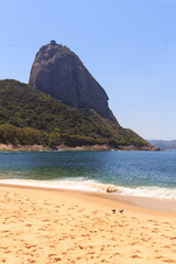 Mountain Sugarloaf  red beach (Praia Vermelha) doves, Rio de Jan