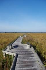 草原の秋と木道